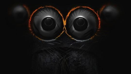 Os olhos de uma aranha saltadora. Por Yousef Al Habshi