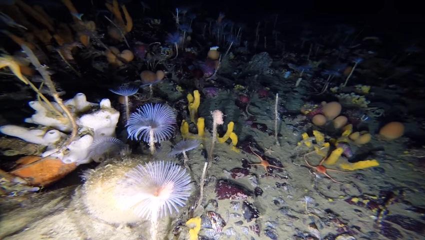 O fundo do mar abaixo da Antártida é incrivelmente bonito