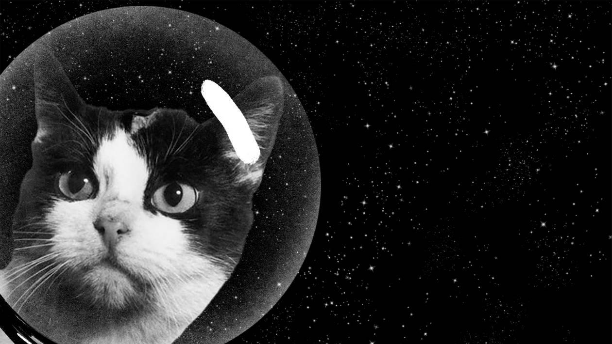 A história secreta do primeiro gato no espaço