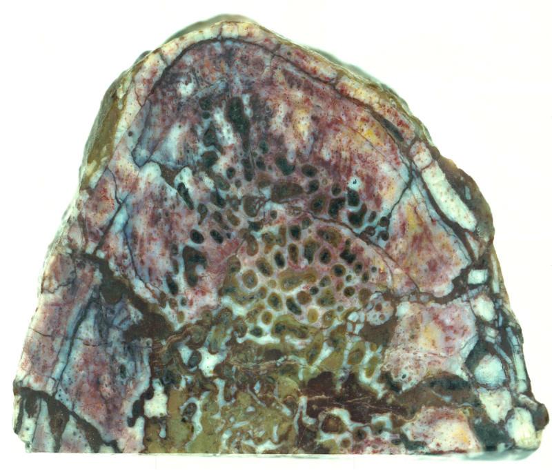 lufengossauro-costela