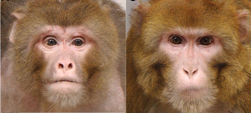 macaco-fome-2