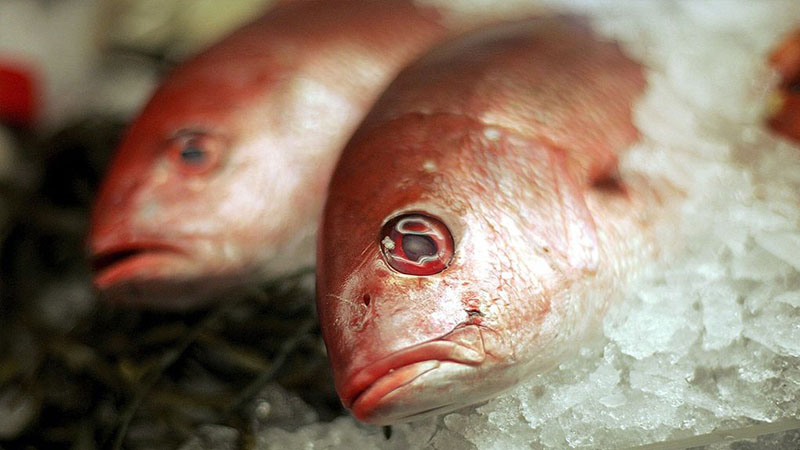 peixe-de-criacao