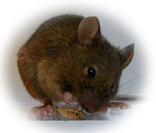 rato-zumbi-3
