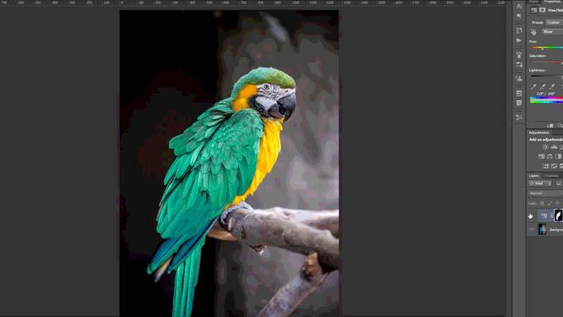 arara-photoshop