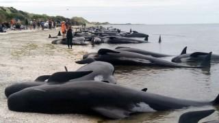 baleias-nova-zelandia
