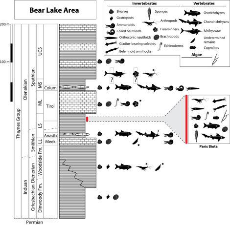 fossil-extincao-massa