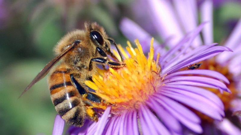 abelha-mel-2