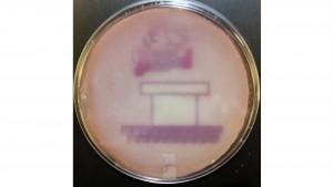 Cientistas projetaram bactéria para reproduzir uma imagem de Super Mario