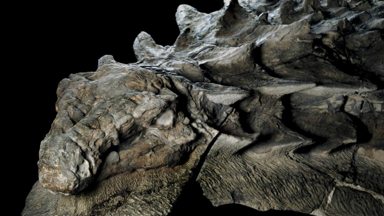 dinossauro-110