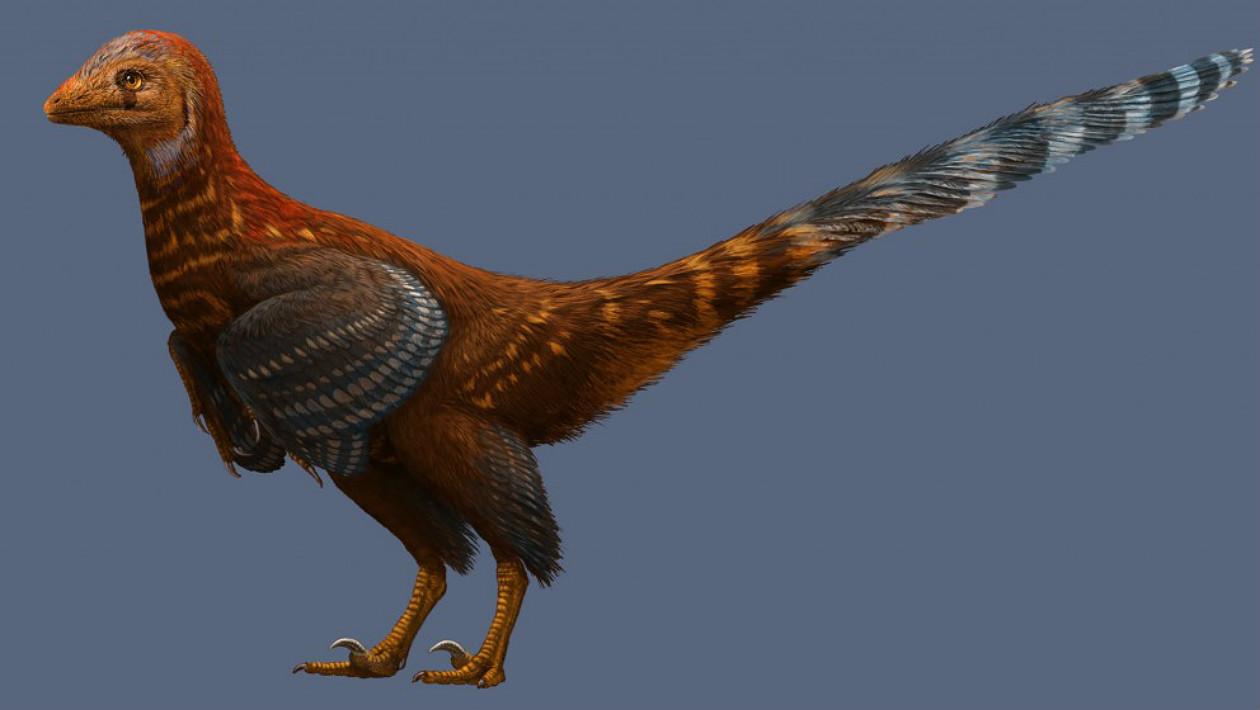 dinossauro-galinha