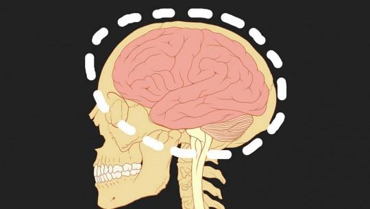 cerebro-tamanho