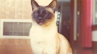 gato-cientista-fisico