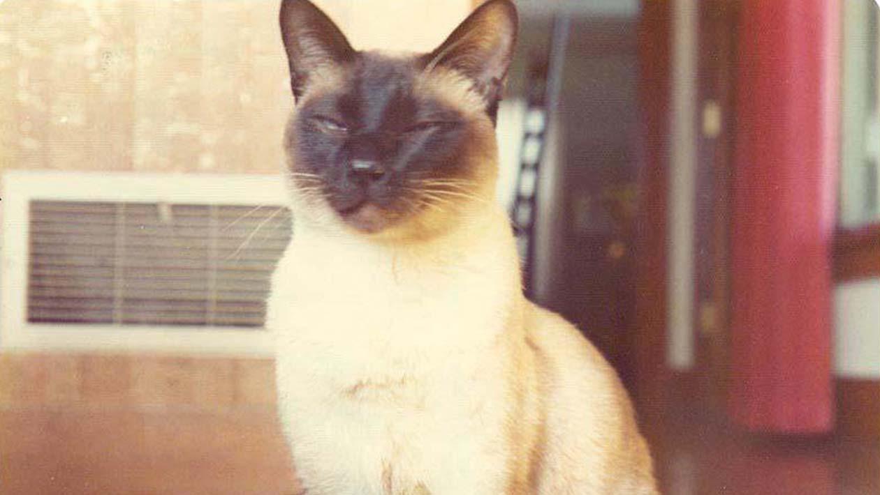 A história secreta do gato que foi autor de um artigo de física
