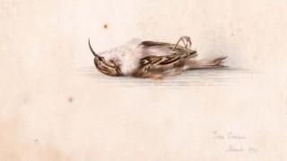 pintura-passaro-pinguim