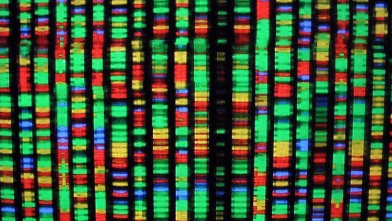Controvérsia sobre edição de genes nos lembra como o dinheiro influencia a ciência