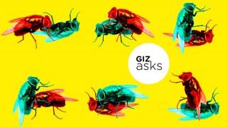 insetos-sexo