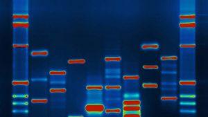 Esta tecnologia de criptografia pode proteger a privacidade do seu DNA