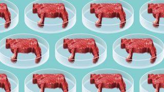 carne-laboratorio