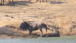 croccapa