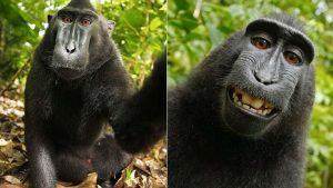 Ainda bem que nunca mais teremos que ouvir falar desta selfie do macaco