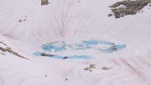 Mais evidências que a neve rosa será um problema para o planeta