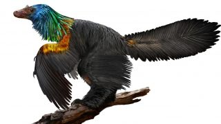 dinossauro-teropode