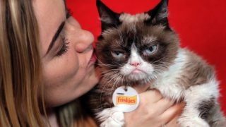 grumpy-cat-AP