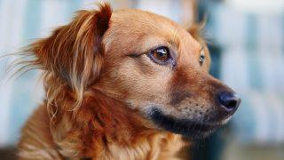 dog-3162696_1920
