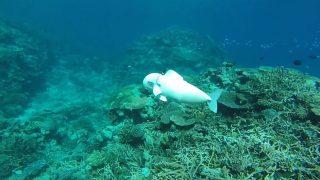 peixe-robo