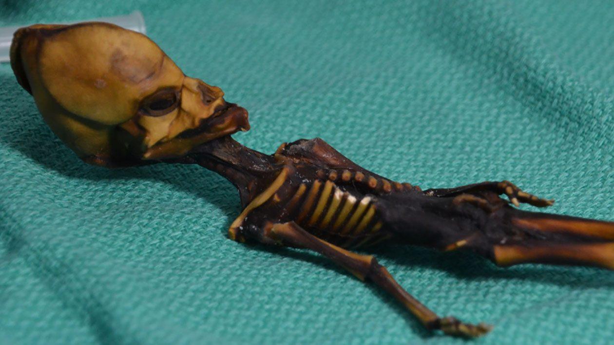 Múmia 'alienígena' encontrada no Atacama é na verdade um ser humano repleto de mutações
