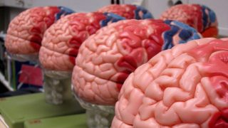 cerebro-flickr