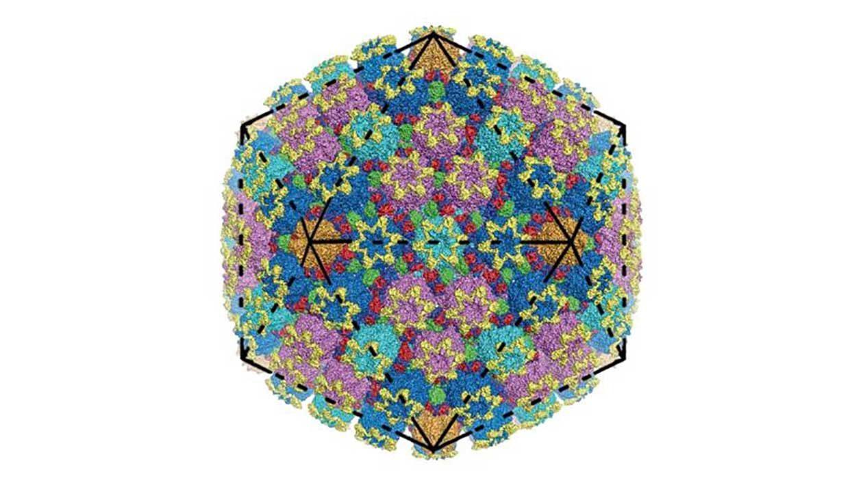 Nova representação 3D do vírus da herpes é impressionante