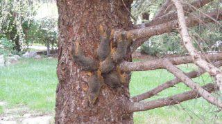 esquilos-emaranhados