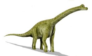 braquiossauro-wiki