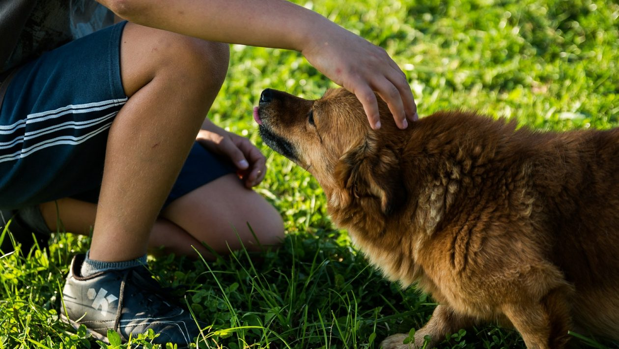Estudo prova o óbvio: cachorros sabem quando donos estão mal e farão de tudo para confortá-los