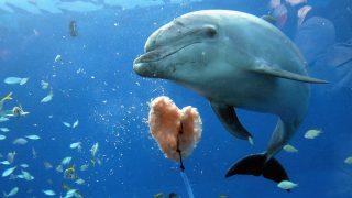 Animals Receives Valentine's Day Gifts