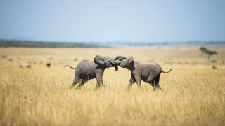 elefantes-flickr