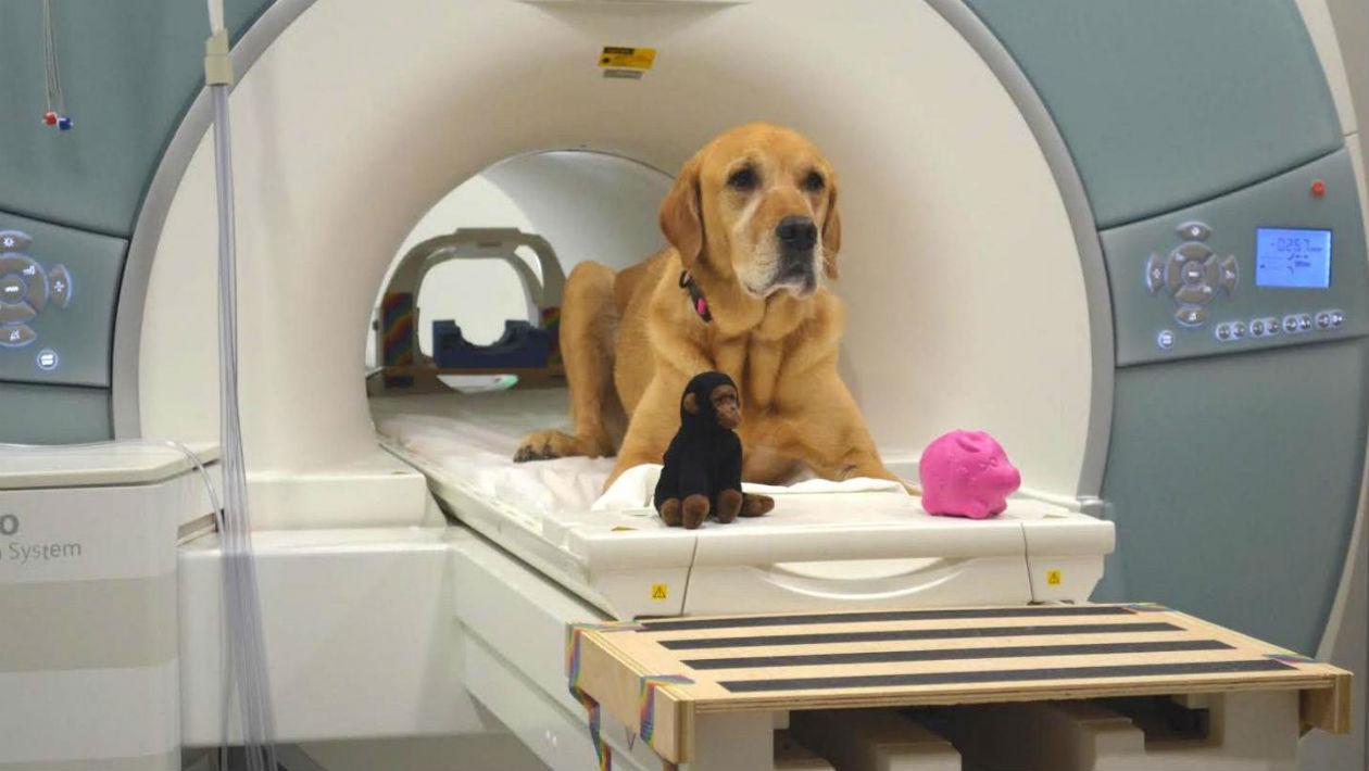 Novo estudo reforça que o seu cachorro entende o que você fala — e ainda se esforça para aprender