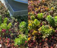 Comparativo de foto entre o View 20 e o Pixel 3