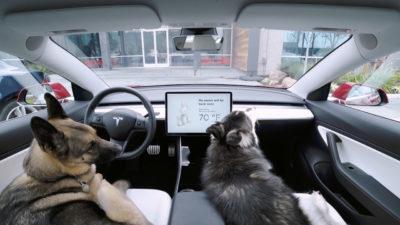 """dois cães dentro de um carro da tesla. no painel, a mensagem """"my owner will be back soon"""" e a temperatura de 70 graus fahrenheit"""