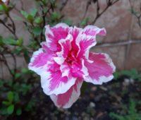 Essa foto ficou bem bonita e o efeito de desfoque se deu pela proximidade que eu estava da flor. Foi quase um macro.