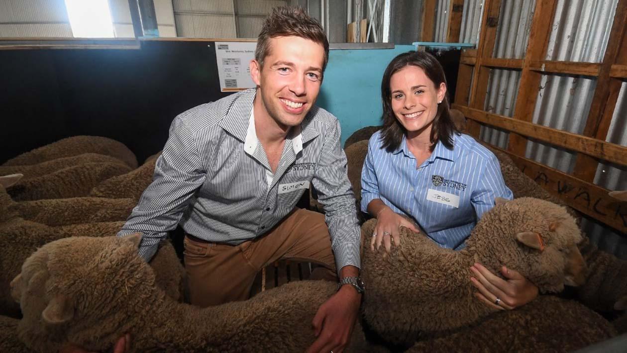 Os cientistas Simon de Graaf e Jessica Rickard com os cordeiros nascidos da inseminação