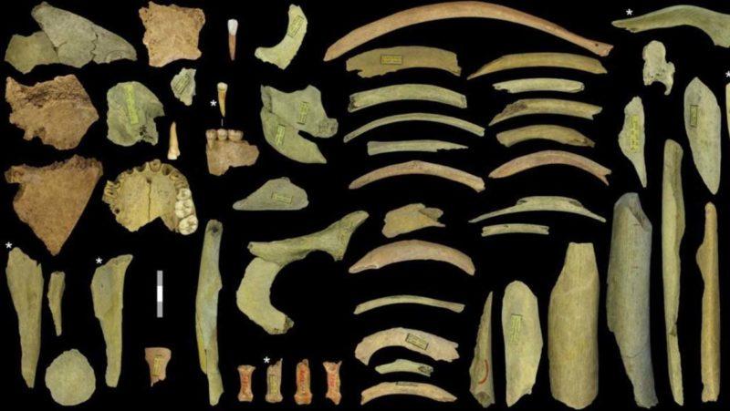 Ossos mostram evidências de canibalismo entre os Neandertais