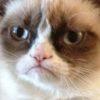 Grumpy Cat, o meme da gatinha rabugenta