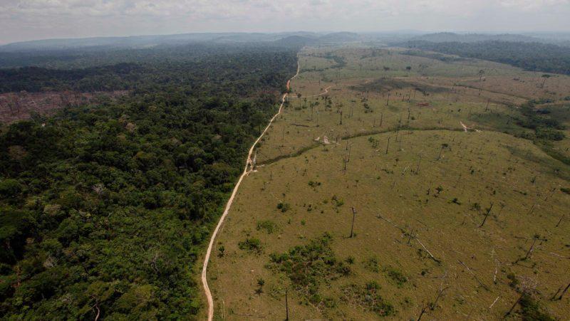 Desmatamento e mudanças climáticas podem dividir a floresta amazônica, revela estudo