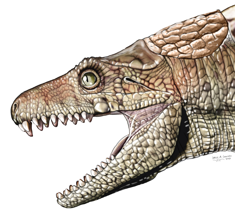 Armadillosuchus, um onívoro crocodiloforme extinto