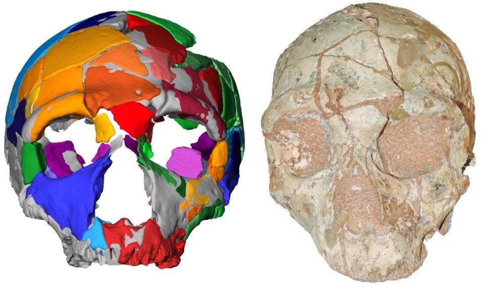 Fragmentos do crânio Apidima 2 (direita) e sua reconstrução (esquerda). O espécime foi identificado como Neandertal. Crédito: Katerina Harvati, Universidade Eberhard Karls de Türbingen