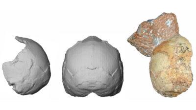 Crânio Apidima 1 encontrado na Grécia; acredita-se que ele pertencia a um dos primeiros homens modernos da Europa