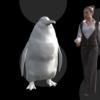Imagem em 3D mostra um pinguim e uma mulher. O pinguim tem o dobro da largura da mulher e uma altura um pouco menor.