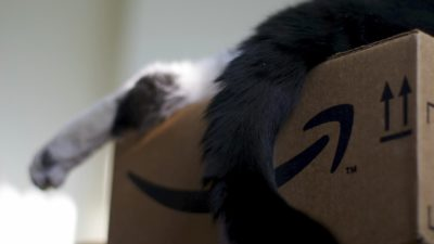 Gato dentro de caixa da Amazon.